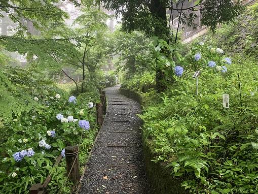 梅雨の野草園紹介